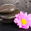Spa stones with water drops and pink flower on black background — Stock Photo