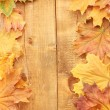 Dry autumn maple leaves on wooden background — Stock Photo