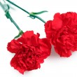 Two red carnation isolated on white - Foto Stock