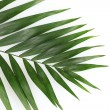 Beautiful palm leaf isolated on white — Stock Photo #8117889