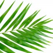 Beautiful palm leaf isolated on white — Stock Photo