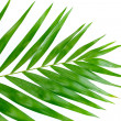 Stock Photo: Beautiful palm leaf isolated on white