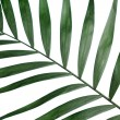 Beautiful palm leaf on blue background — Stock Photo #8117899