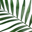 Stock Photo: Beautiful palm leaf on blue background