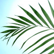 Beautiful palm leaf on blue background — Stock Photo