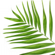 Beautiful palm leaf isolated on white — Stock Photo #8117919