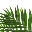 Royalty-Free Stock Photo: Beautiful palm leaves isolated on white