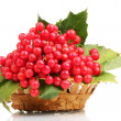 Red berries of viburnum in basket isolated on white - Stock Photo