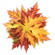 Vivid autumn maple leaves isolated on white — Foto de Stock
