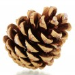 Beautiful pine cone isolated on white — Stock Photo #8118662