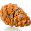 Beautiful pine cone isolated on white — Stock Photo #8118693