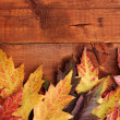 Vivid autumn maple leaves on wooden background - Stock Photo