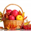 Beautiful autumn harvest in basket and leaves isolated on white — Stock Photo