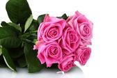 Many pink roses isolated on white — Stock Photo
