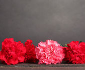 Bouquet of carnations on grey — Stock Photo