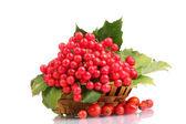 红浆果的琼花在篮子和孤立在白色的蔷薇 — 图库照片