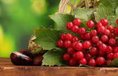 Red berries of viburnum in basket and chestnuts on wooden table on green ba — Stock Photo