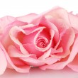 Pink rose isolated on white — Stock Photo #8120657