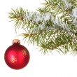 Christmas ball on the tree on white background — Stock Photo