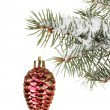 Christmas cone on the tree on white background — Stock Photo