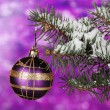 Christmas ball on the tree on purple - Stok fotoğraf