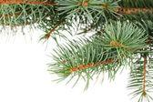 Groene kerstboom geïsoleerd op wit — Stockfoto