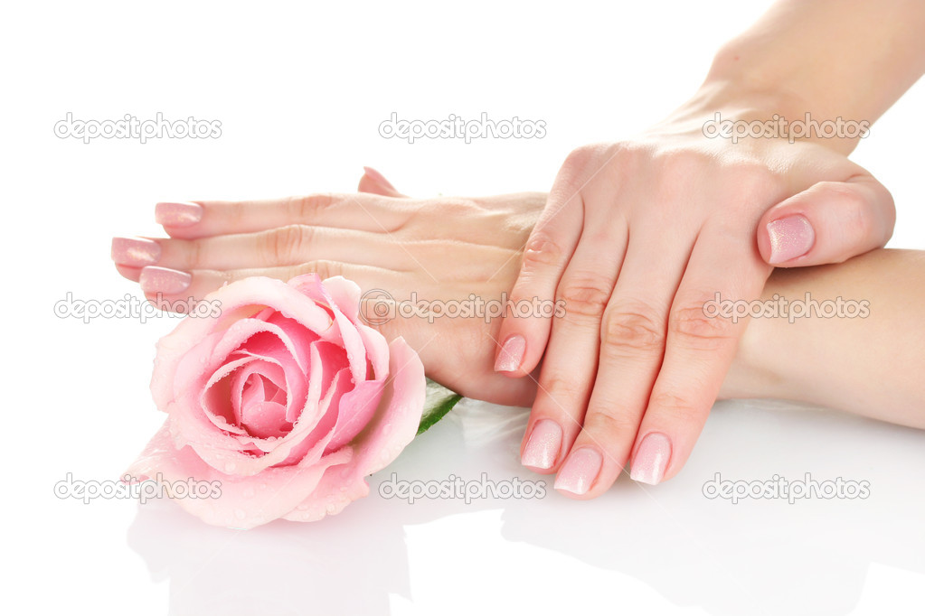 Pink rose with hands on white background  Stock Photo #8120755