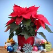 Beautiful poinsettia with christmas balls and presents on wooden table on b — Stock Photo