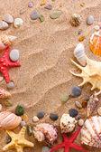 Plage avec beaucoup de coquillages et étoiles de mer — Photo