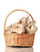 Funghi in cestino isolato su bianco — Foto Stock