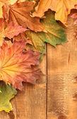 Hojas de arce otoño seco sobre fondo de madera — Foto de Stock