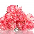 Beautiful carnations isolated on white - Stock Photo