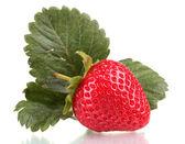 Sladké jahodové listy izolované na bílém — Stock fotografie