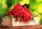 Red berries of viburnum in wooden box on green background — Stock Photo