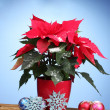 Royalty-Free Stock Photo: Beautiful poinsettia with christmas balls on wooden table on blue backgroun