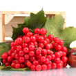 Red berries of viburnum in wooden box and chestnuts isolated on white - Stock Photo