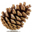 Beautiful pine cone isolated on white - Stock Photo