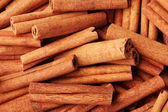 Cinnamon sticks closeup — Stock Photo