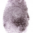Fingerprint isolated on white — Stock Photo #8372355