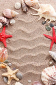 Beach with a lot of seashells and starfish — Stock Photo