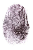 Fingerprint isolated on white — Stock Photo