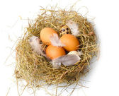Chicken and quail eggs in a nest isolated on white — Stock Photo