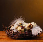 Quail eggs in nest on wooden table on brown background — Stok fotoğraf