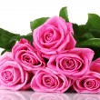 Many pink roses isolated on white - Stock Photo