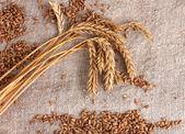 Wheat and wheat-ears on burlap closeup — Stock Photo
