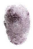 孤立在白纸上的指纹 — 图库照片