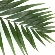 Royalty-Free Stock Photo: Beautiful palm leaf isolated on white
