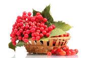 Czerwone jagody kalina w kosz i wrzośca na białym tle — Zdjęcie stockowe