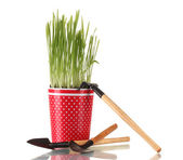 Grama verde em um vaso isolado no branco — Foto Stock