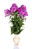 Bouquet of phlox in vase isolated on white — Stock Photo